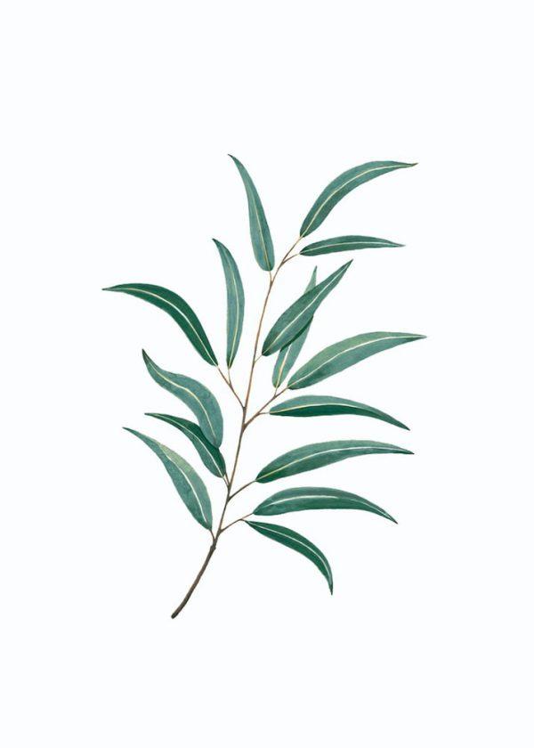 Ilustración Ramo hojas n° 2