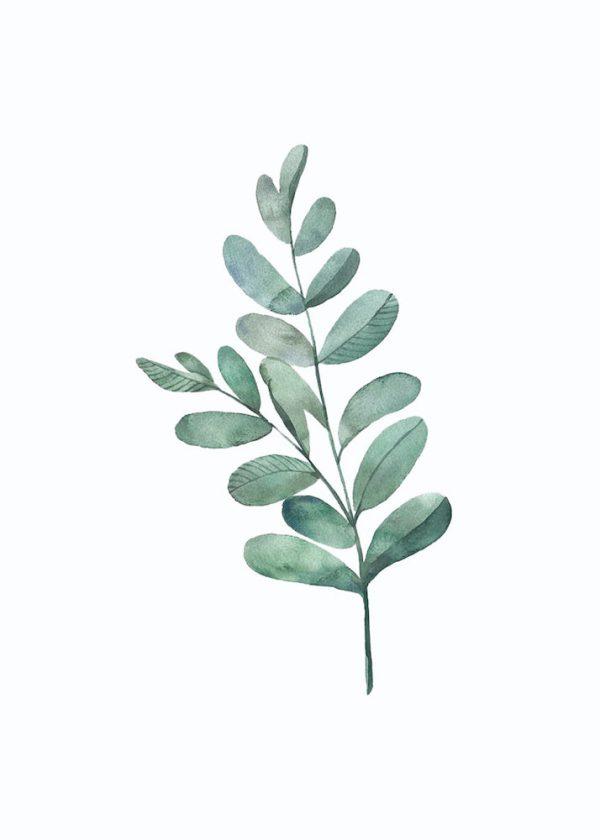 Ilustración Ramo hojas n° 3