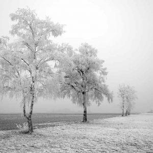 Fotografía Árboles fondo blanco