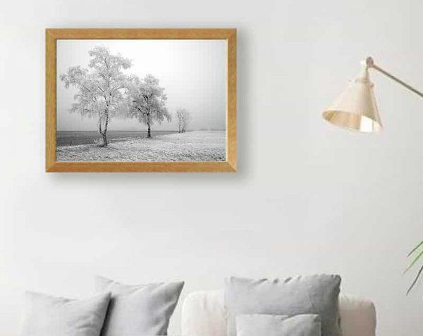 Árboles fondo blanco, Natural / Sin margen