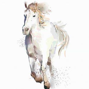 Ilustración Caballo Blanco