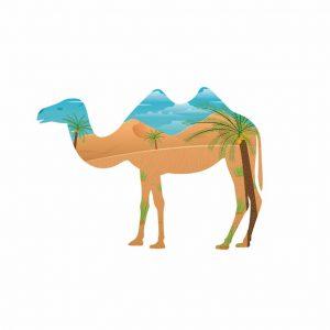 Ilustración Camello Doble