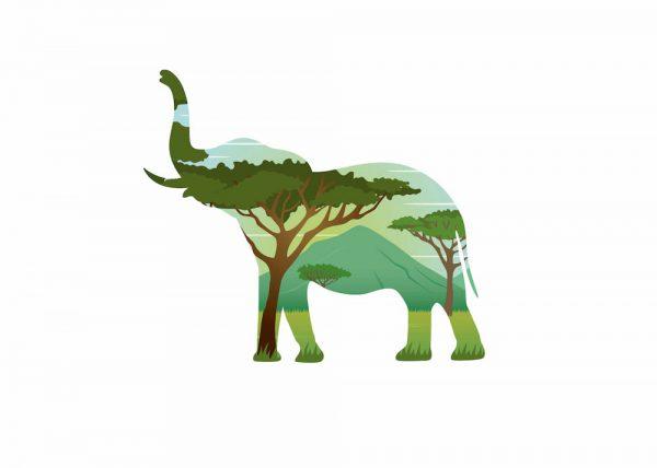 Ilustración Elefante Doble