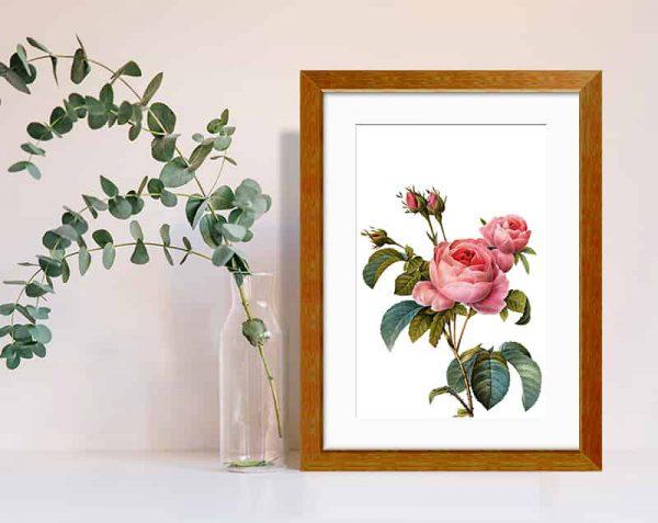 Rosas Realistas, Barnizado / con margen