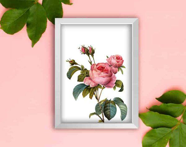 Rosas Realistas, Blanco / Sin margen