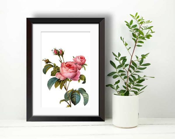 Rosas Realistas, Negro / Con margen