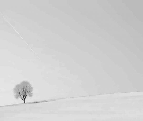 fotografía árbol fondo blanco